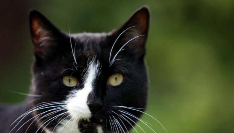 красивый домашний кот