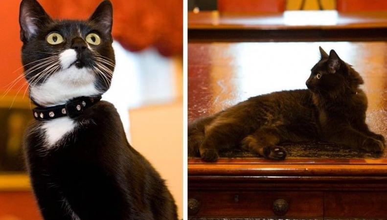 Уайтхолл принял в штат новых котов-мышеловов фото:bbc.com