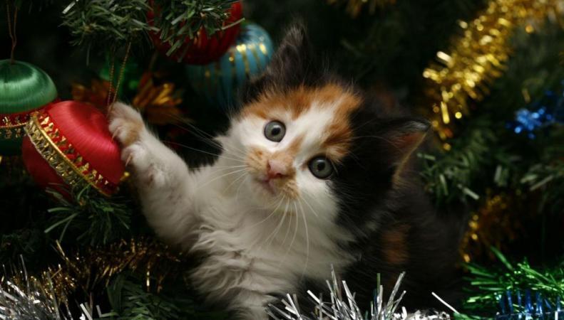 рождество подарки для кошки
