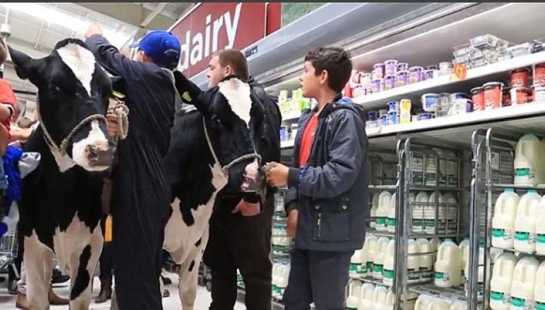 коровы в супермаркете