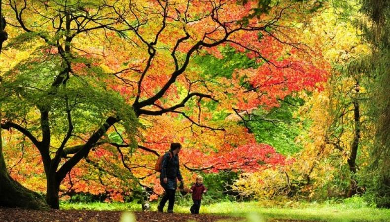 парк в пригороде Бата, Сомерсет