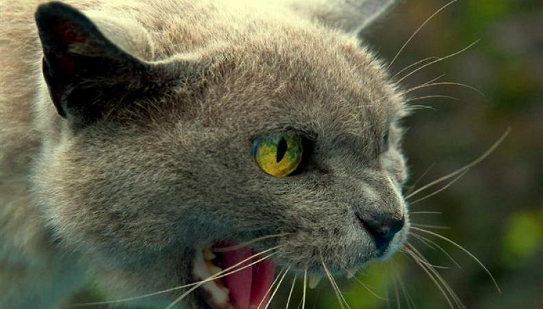 В Британии кот напал на на мужчину из-за запаха дорогого парфюма