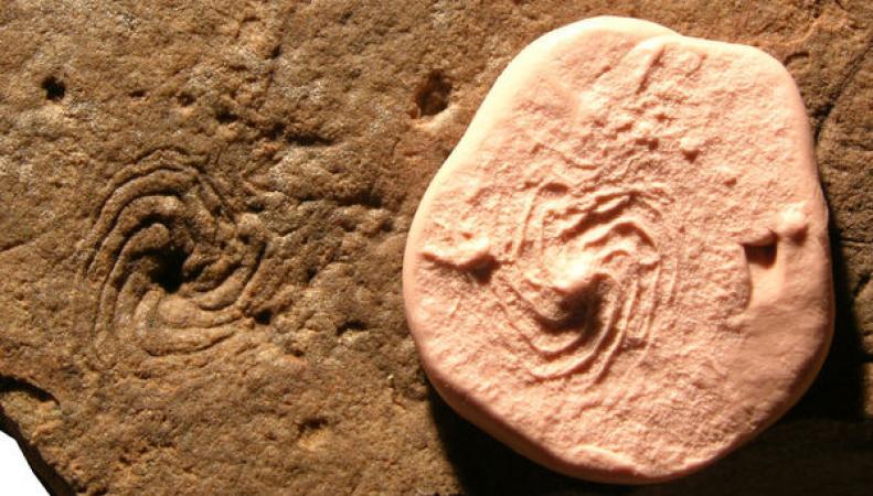 На северо-востоке Англии нашли следы млекопитающих возрастом в 7000 лет