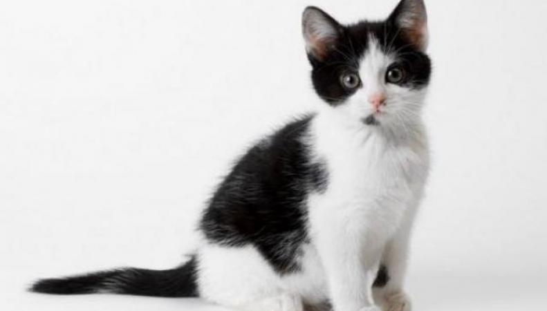 За убитого в микроволновке котенка британка получила 3,5 месяца тюрьмы