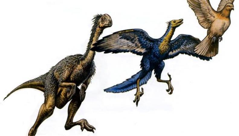 Превращение динозавров в птиц произошло почти мгновенно