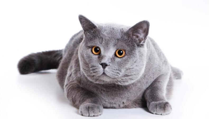 Британец сел в тюрьму на 4 месяца за убийство кота