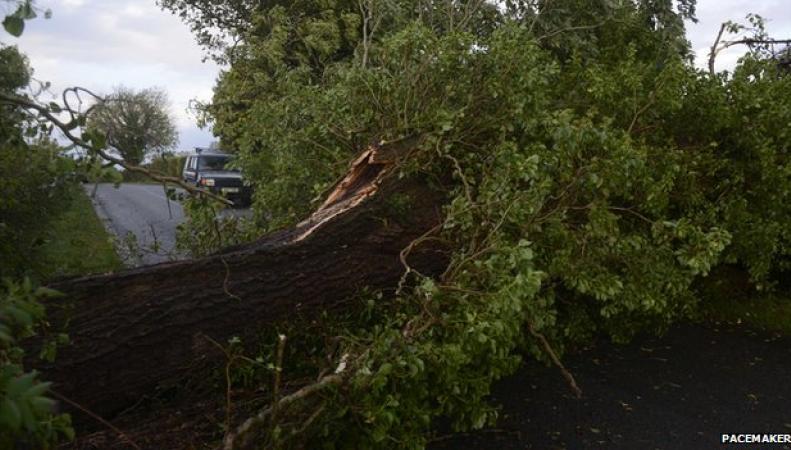 обрывы проводов упавшими деревьями