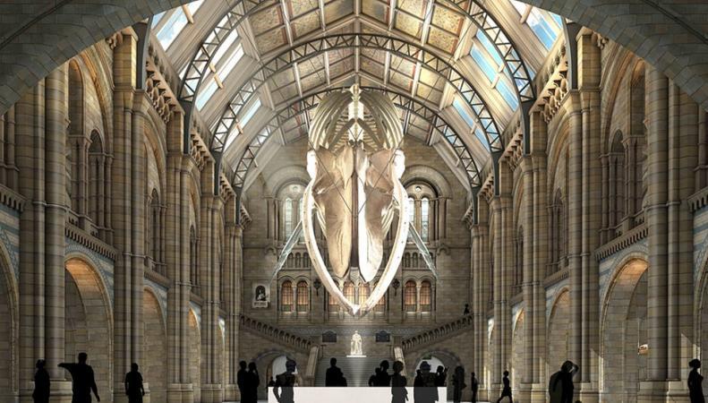 Центральный зал Музея естествознания