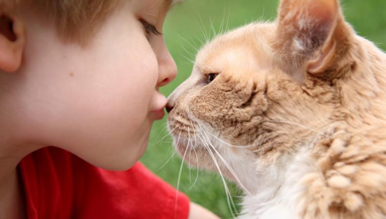 Кошки в доме повышают риск развития шизофрении у детей