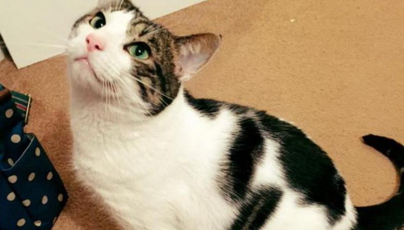 Королевская почта Британии не выдала посылку коту, не имеющему документов