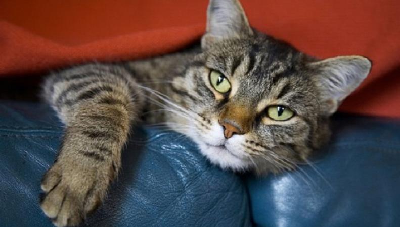 Кошки действительно гуляют сами по себе, - британские ученые