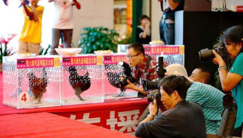 Курицы на конкурсе красоты в Китае