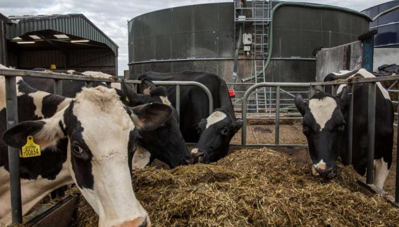В Великобритании зафиксирован случай коровьего бешенства