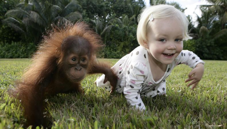 Обезьяна и ребенок