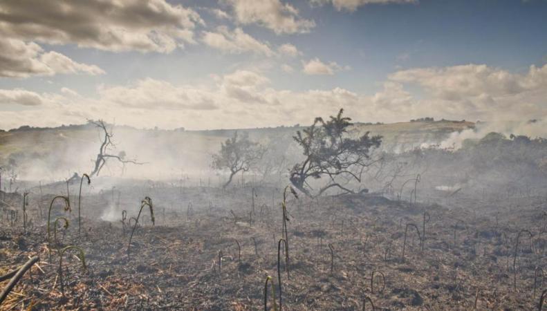 Стоакровый лес после пожара