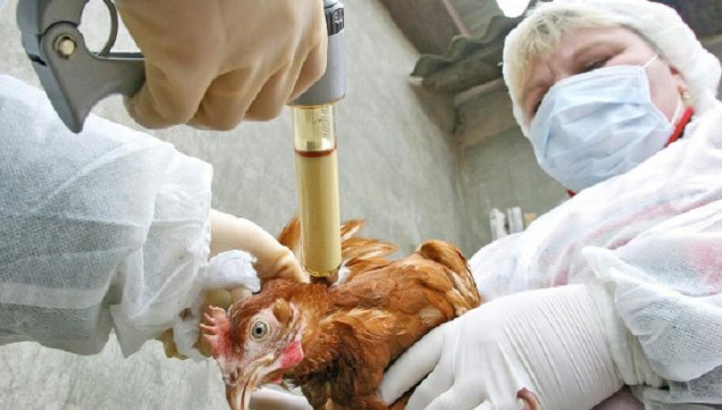 В Великобритании подтверждена вспышка птичьего гриппа