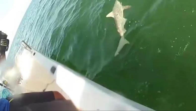 Ловля акулы