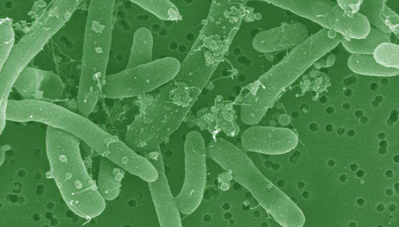 бактерия-экстемофил