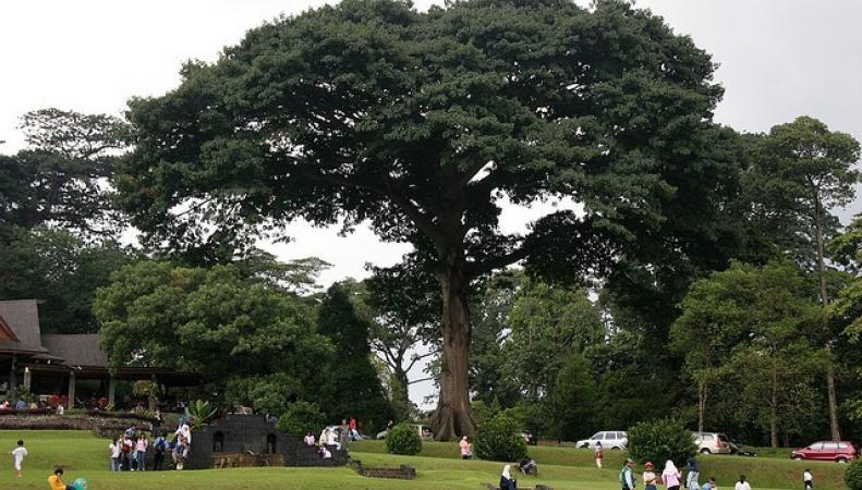 В Индонезии упавшее дерево стало причиной смерти людей