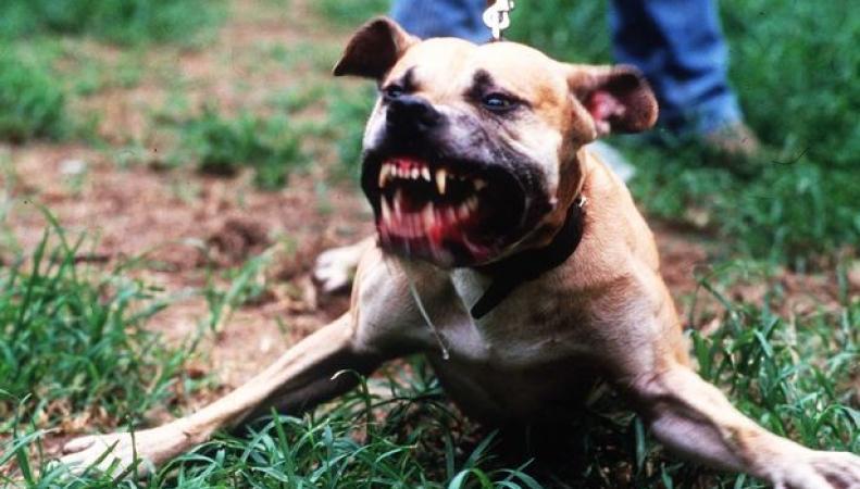 Собаки бойцовых пород
