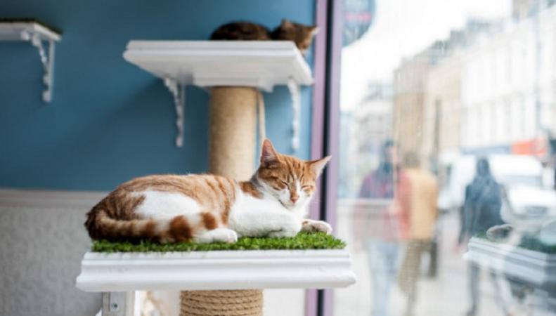 Открывается новое кошачье кафе в Лондоне