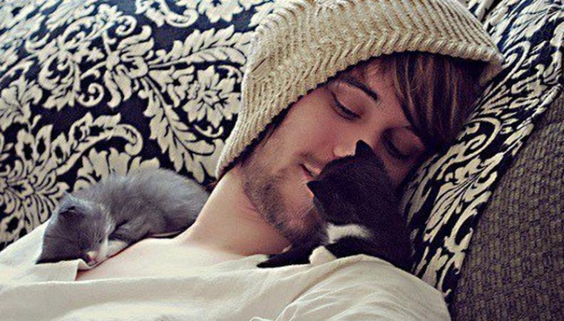 Кошки и мужчина
