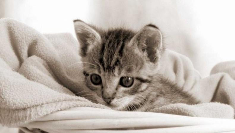 Впервые зафиксированы случаи заражения туберкулезом людей от кошек