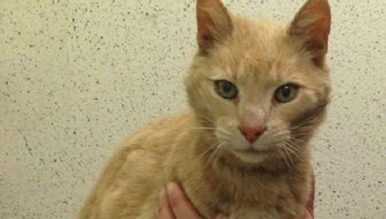 Пропавший в Австралии кот найден в Ирландии