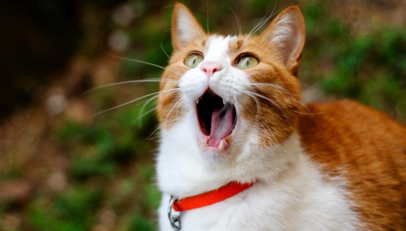 Самая престижная британская премия может достаться коту
