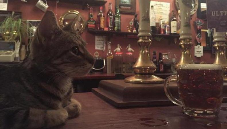 В Британии открылся уникальный кошачий паб