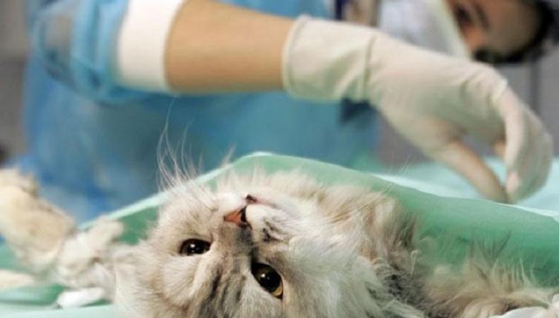 Дорогое лечение домашних животных британцев