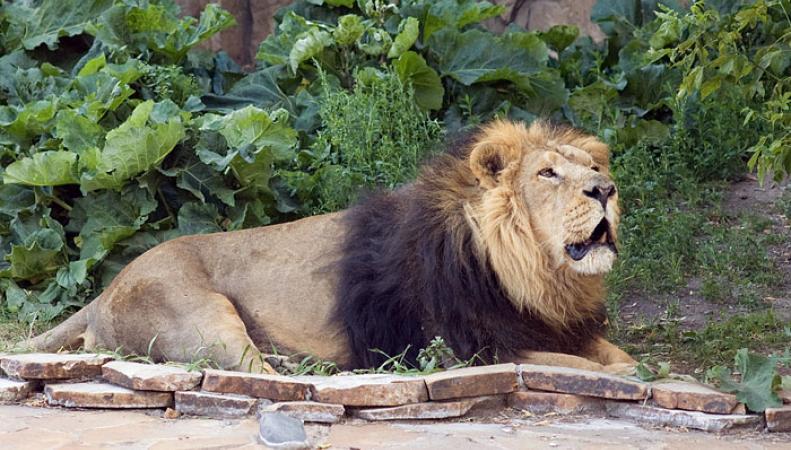 Лондонский зоопарк предложил посетителям новое развлечение