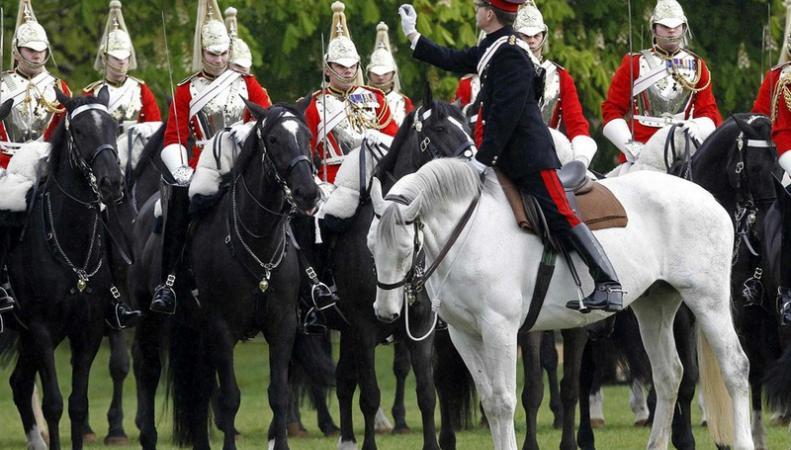 Британская армия за 10 лет умертвила около 200 лошадей