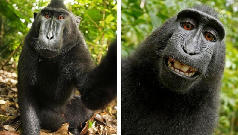 Автопортрет обезьяны