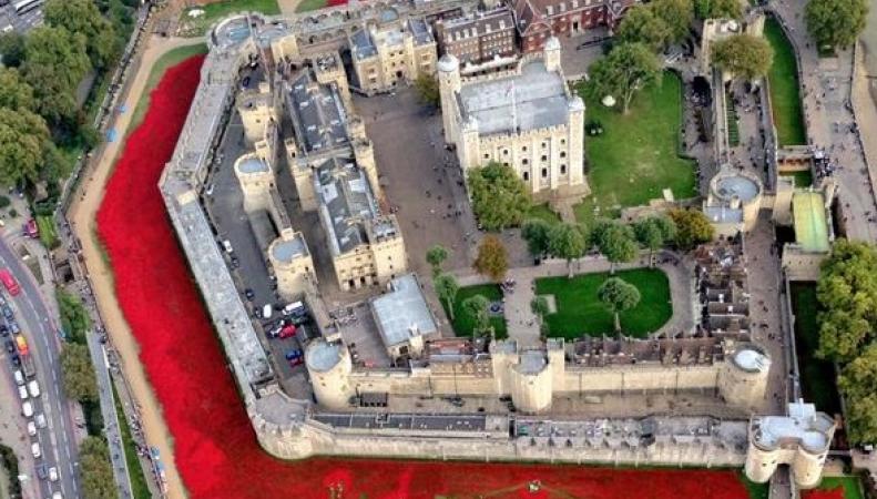 Арт-инсталляция из красных маков в Лондоне