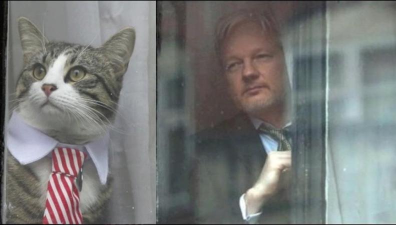 Джулиан Ассанж и его кот