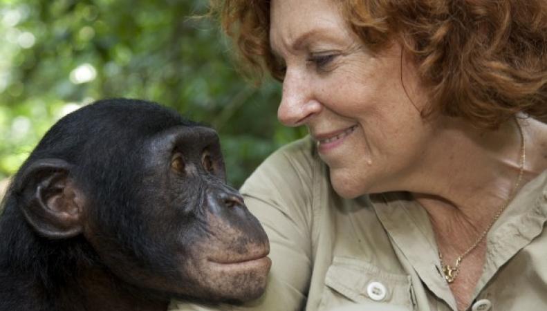 Ученые из Британии расшифровали язык жестов шимпанзе