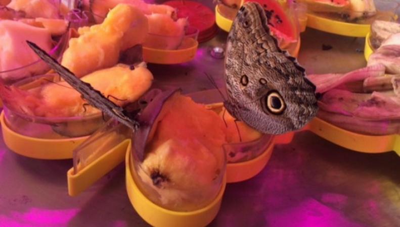В Лондоне открылся первый в Британии музей еды