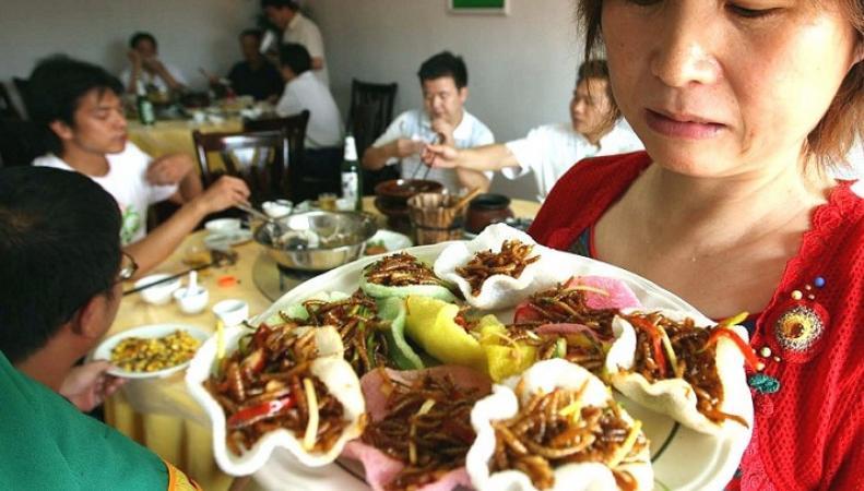 Ученые рекомендуют есть блюда из насекомых