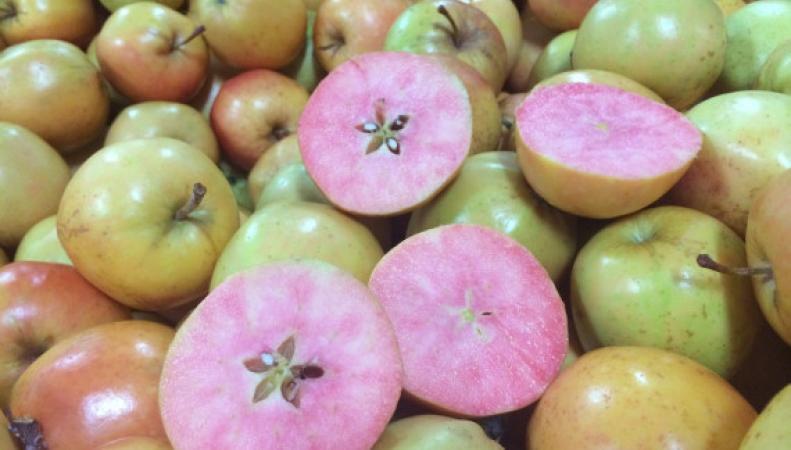 яблоки сорта Surprize