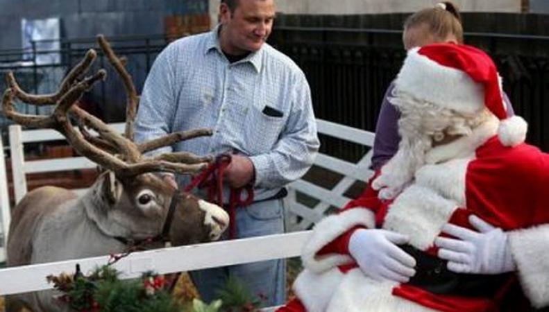 По улицам Ноттингема бегал «рождественский» олень