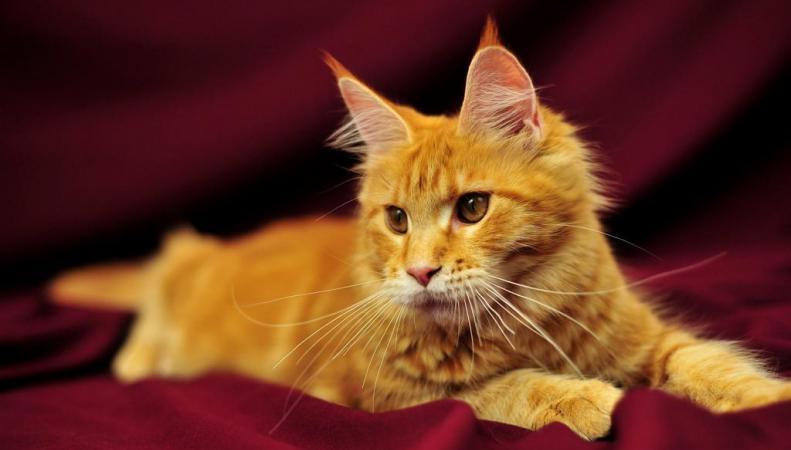 В Корнуолле открылся отель класса люкс для кошек