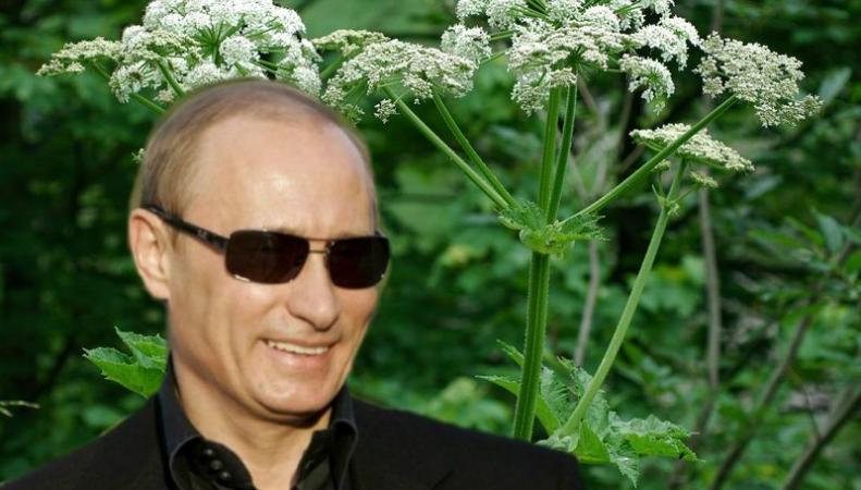 Путин и борщевик
