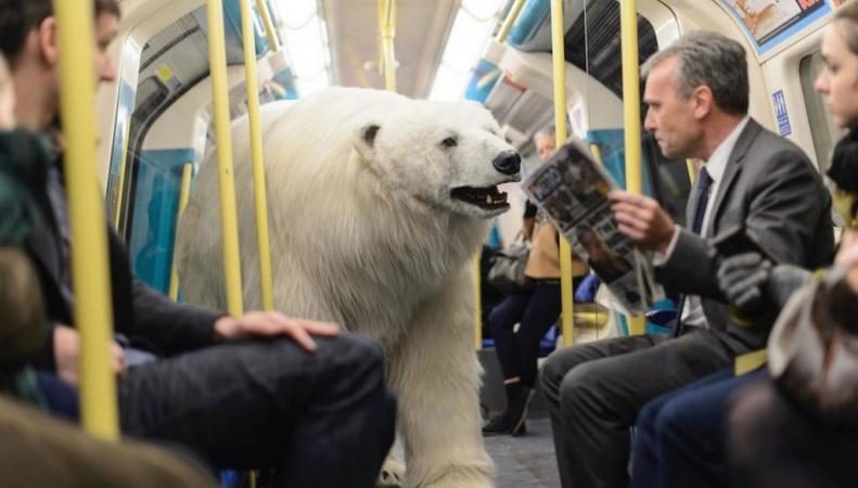 Белый медведь в метро