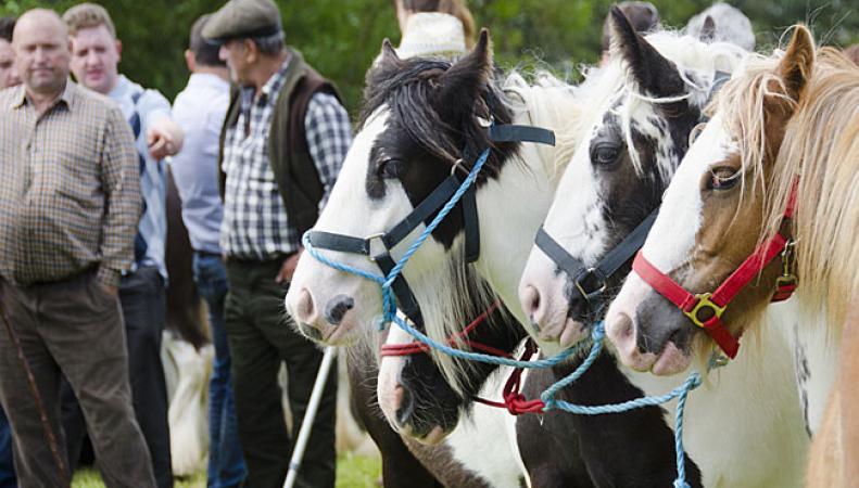 Ярмарка лошадей в Эпплби