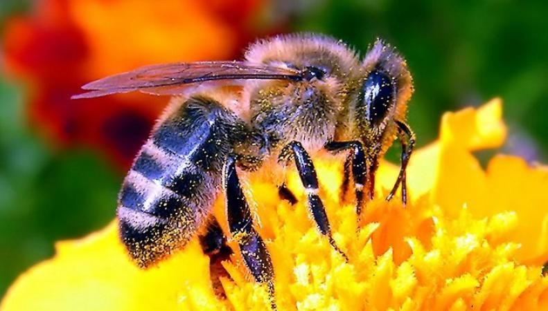 Пчела стала причиной внеплановой посадки самолета в Англии