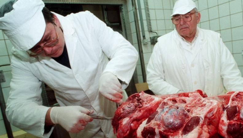 Ученые исследуют говядину