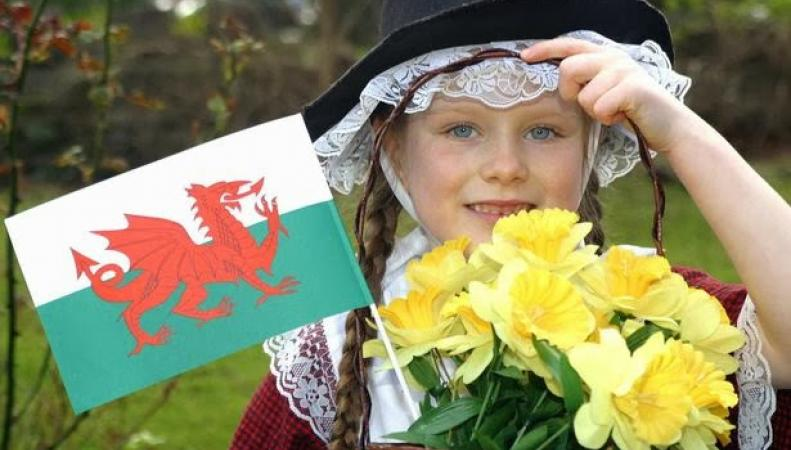 Флаг Уэльса и нарциссы