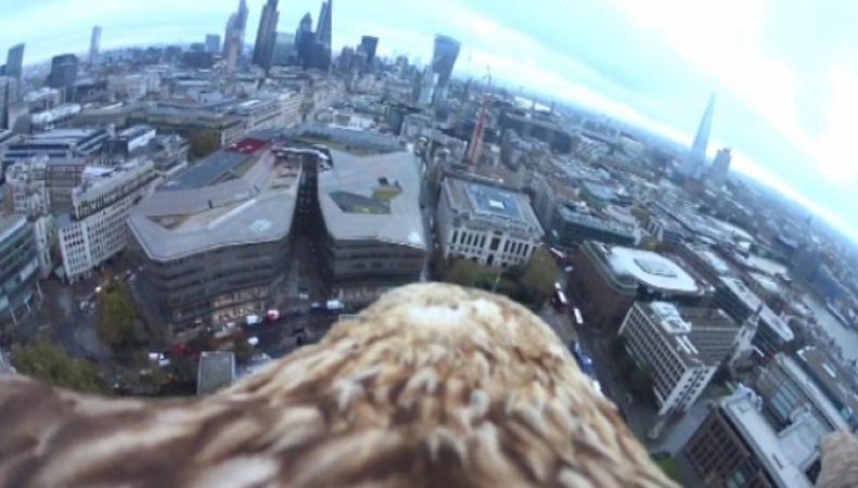 Орел снял Лондон с высоты птичьего полета