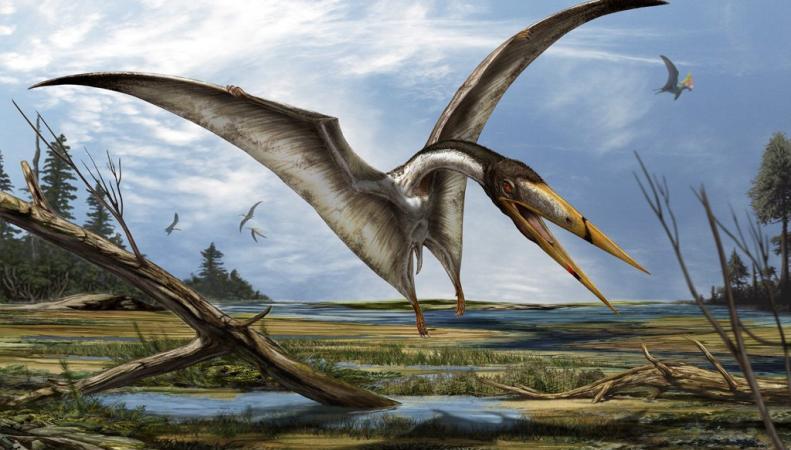 В результате исследований учеными из США названа крупнейшая птица за всю историю существования